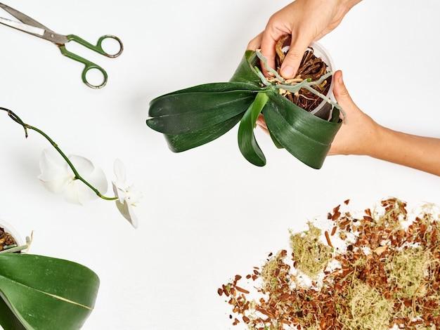 Femme, repiquer, orchidée, chez soi