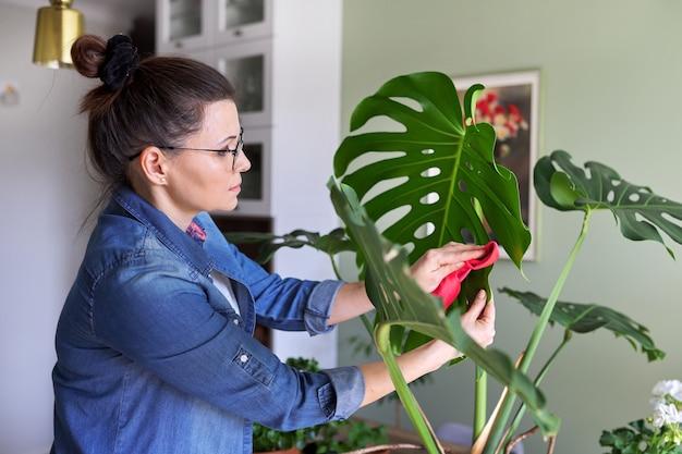 La femme s'occupe de la plante en pot à la maison, la femme nettoie les feuilles de monstera et les asperge d'eau. loisirs, jardinage domestique, plante d'intérieur, jungle urbaine, concept d'amis en pot
