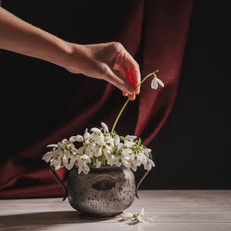 Femme avec sa main met une fleur en bouquet de perce-neige blancs galanthus nivalis en pot rétro vintage sur des tons sombres avec une surface en tissu rouge.