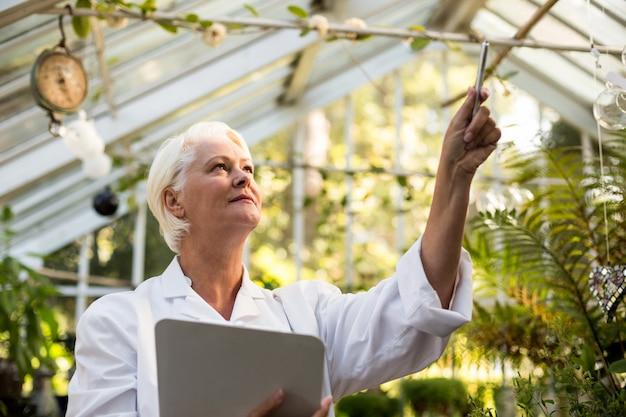 Femme scientifique examinant la plante grimpante à effet de serre