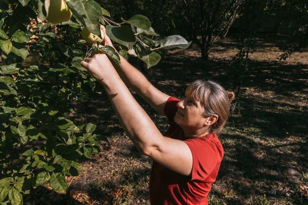 Femme en t-shirt rouge cueillir des pommes de l'arbre dans le jardin d'été