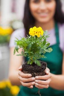 Femme tenant une plante à la caméra