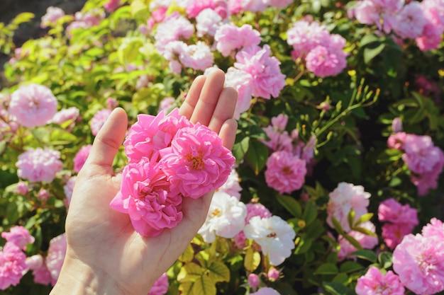 Femme, tenue, roses, gros plan l'été.