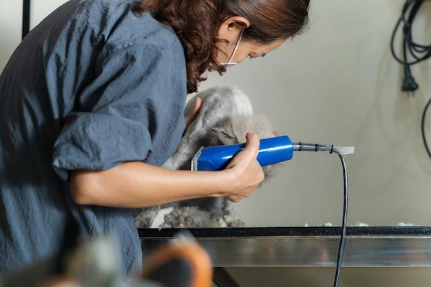 Femme toiletteur coupe les cheveux d'un chat dans un salon de beauté pour chat