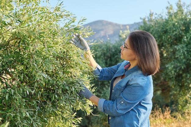 Femme travaillant dans le jardin d'oliviers, fond de montagne