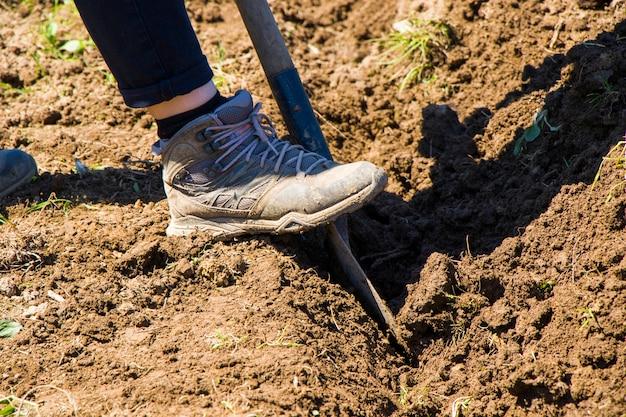 Femme travaillant sur le terrain, scène agricole en géorgie