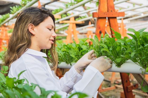 Femme travaille à la ferme hydroponique