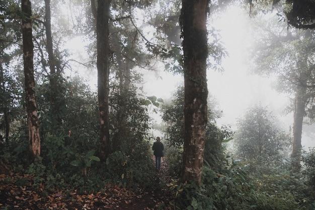 Une femme trekking dans la jungle des bois de la forêt tropicale