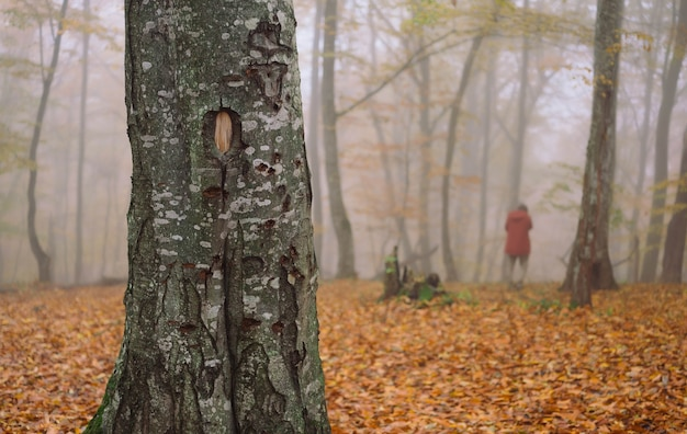 Femme en veste rouge feuille d'automne à pied à l'air frais