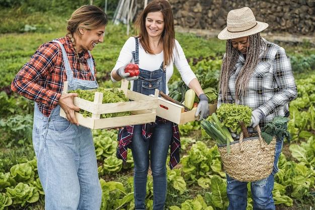 Femmes multiraciales travaillant au jardin ramasser de la laitue biologique