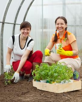 Les femmes plantent des becs de tomate
