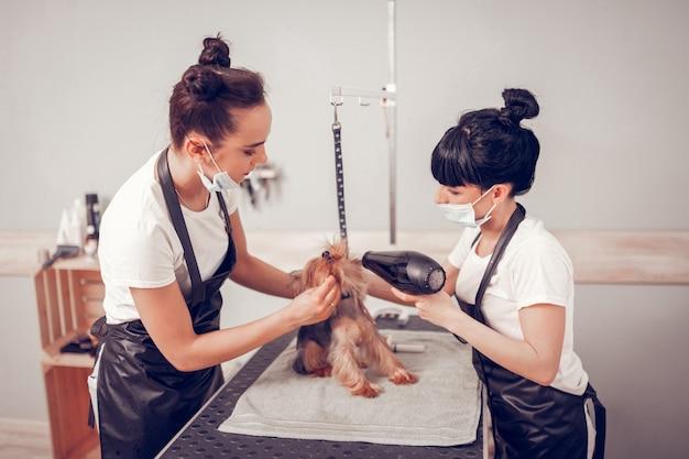 Les femmes qui travaillent. deux femmes travailleuses et attentionnées travaillant dans un salon de toilettage séchant un petit chien