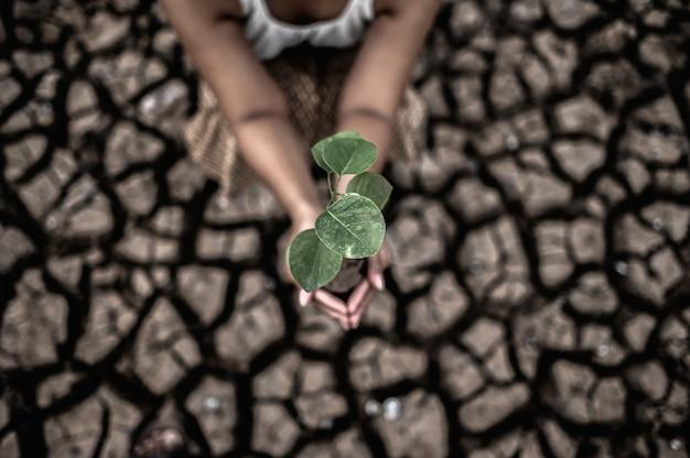 Les femmes sont assises en tenant les semis sur la terre ferme dans un monde en réchauffement.