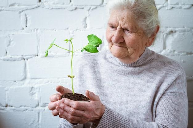 Femmes volontaires tenant des plantes en croissance