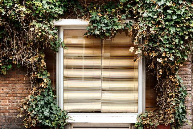 Fenêtre blanche mur vert plante grimpante couverture d'herbe mur fond fenêtre laisse vintage