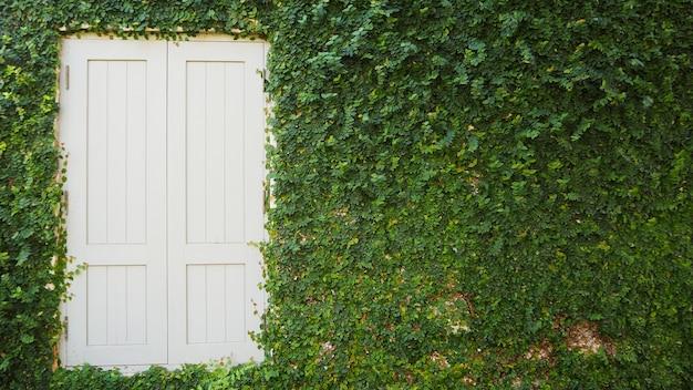 Fenêtre en bois blanche avec fond d'arbustes de mur