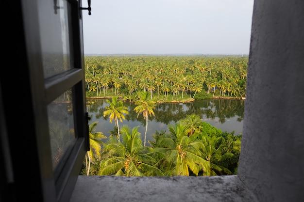Fenêtre grise ouverte avec vue de dessus d'une palmeraie lumineuse
