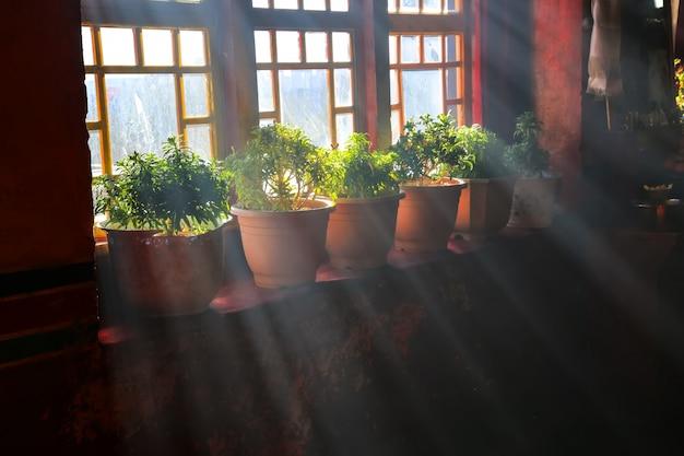 Fenêtre avec des pots de fleurs