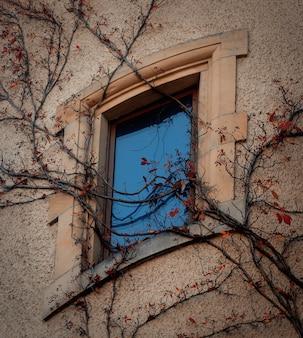 Fenêtre de style art nouveau avec vigne vierge sur un mur