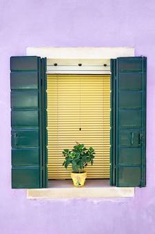 Fenêtre avec volet vert et fleurs en pot jaune.