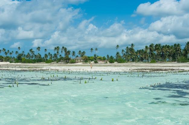 Ferme d'algues dans l'océan