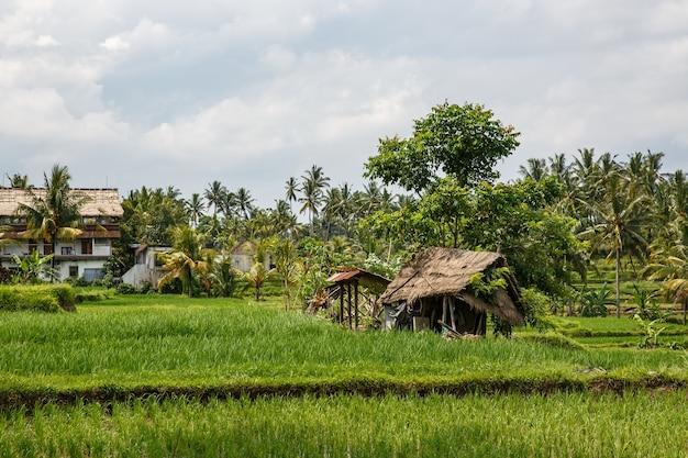 Ferme asiatique. maison avec rizières et jungle de palmiers