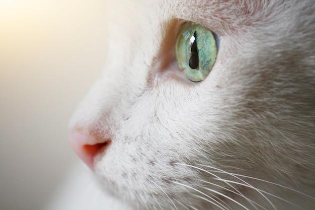 Fermé de beaux yeux de chat blanc