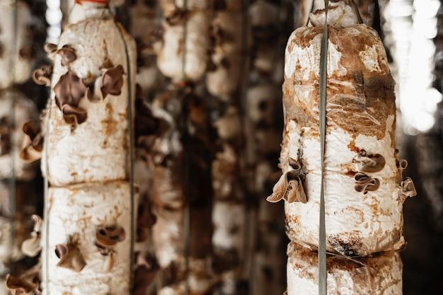 Ferme de champignons au vietnam nourriture protéinée pour le concept de légumes des moines