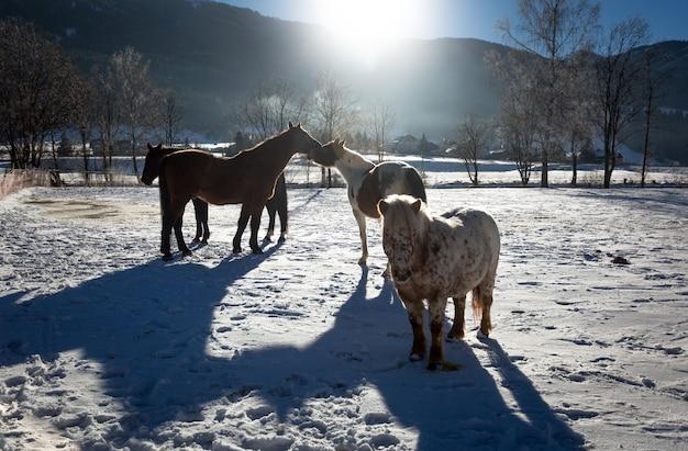 Ferme avec des chevaux de pâturage à la journée ensoleillée d'hiver