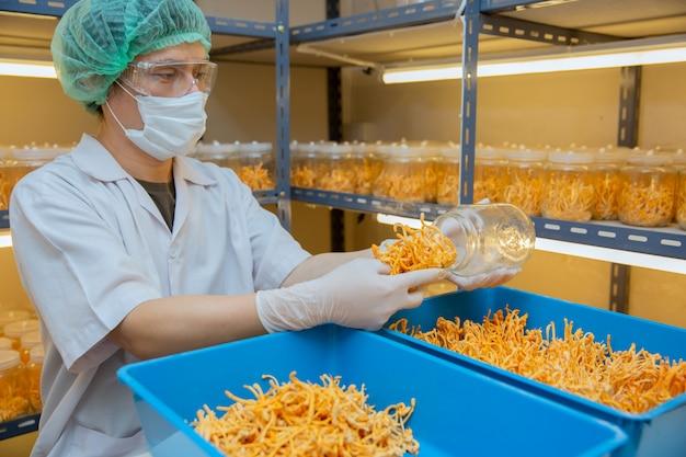 Ferme de cordyceps au concept d'idées chinois santé laboratoire propre herbe sur la main de l'agriculteur à la ferme.