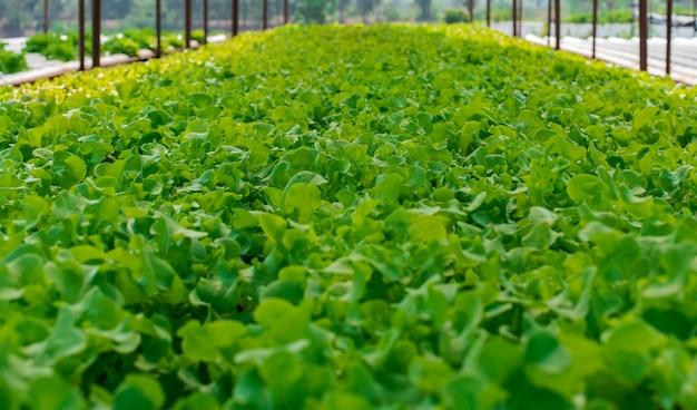 La ferme de culture hydroponique de légumes bio en milieu rural.