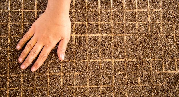 Ferme de culture de main de la graine de laitue