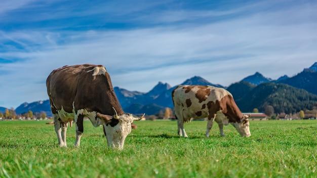 Ferme d'élevage laitier