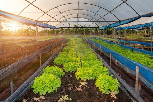 Ferme de légumes bio