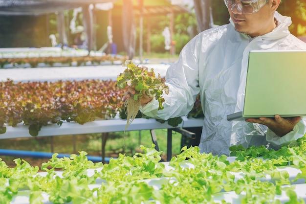 Ferme de légumes hydroponiques du propriétaire dans la serre, contrôle de la qualité du légume