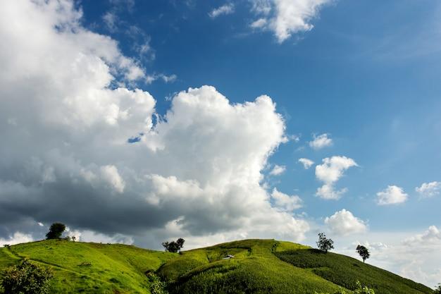 Ferme de maïs sur la colline avec ciel bleu et coucher de soleil