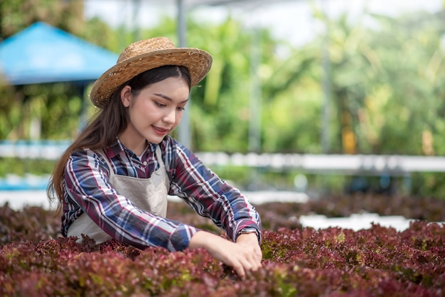 Ferme maraîchère hydroponique. jeune femme asiatique sourire récolte des légumes de sa ferme hydroponique