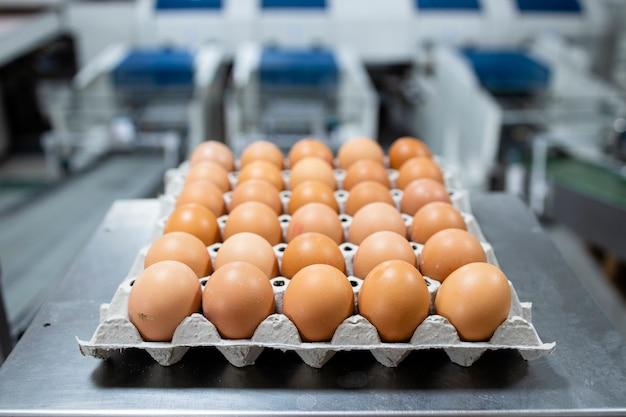Ferme d'oeufs et emballage industriel d'aliments biologiques.