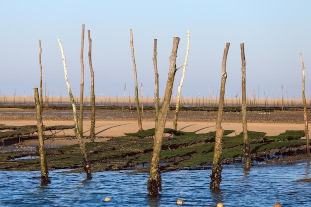 Ferme ostréicole dans le bassin d'arcachon, france