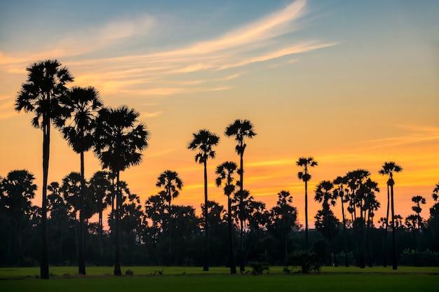 Ferme de palmiers à sucre avec ciel crépusculaire au coucher du soleil