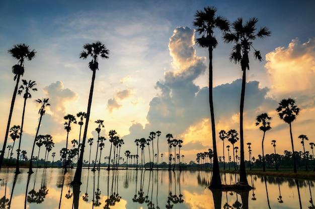 Ferme de palmiers à sucre avec reflet naturel sur l'étang d'eau et beau ciel au lever du soleil, dongtan samkok, province de pathum thani, thaïlande. célèbre destination de voyage du pays chaud du siam.