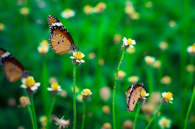 Fermé, papillon, alimentation, herbe fleurie