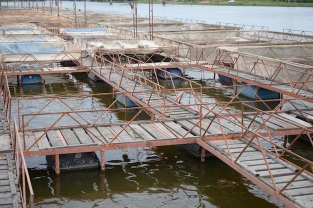 Ferme en plein air pour l'élevage industriel de poissons d'esturgeon