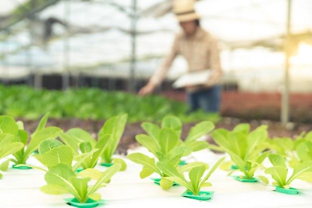 Ferme de salade de légumes biologiques sur l'agriculteur travaillant en arrière-plan