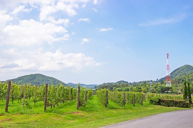 Ferme viticole et jardin près du lac et de la montagne en journée, un ciel lumineux de pattaya, chonburi p