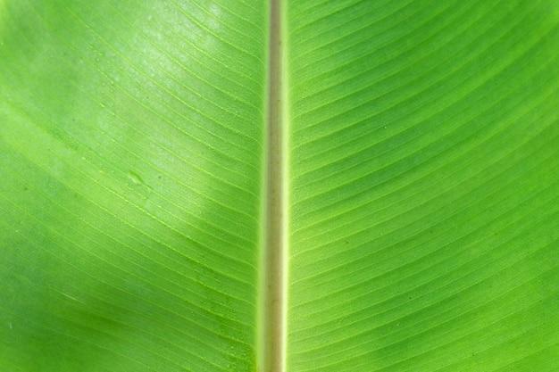 Fermer les feuilles de banane