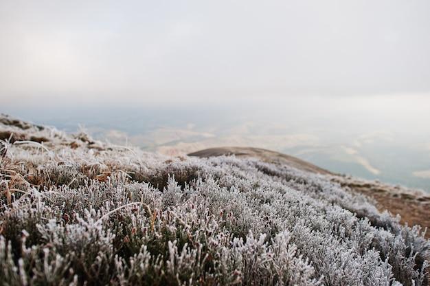 Fermer l'herbe gelée sur la colline de la montagne.
