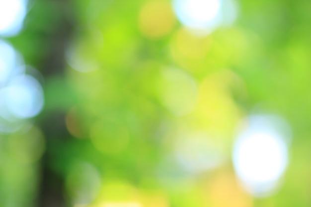 Fermer. image floue d'arbres dans la forêt du matin. photo avec une copie - espace.