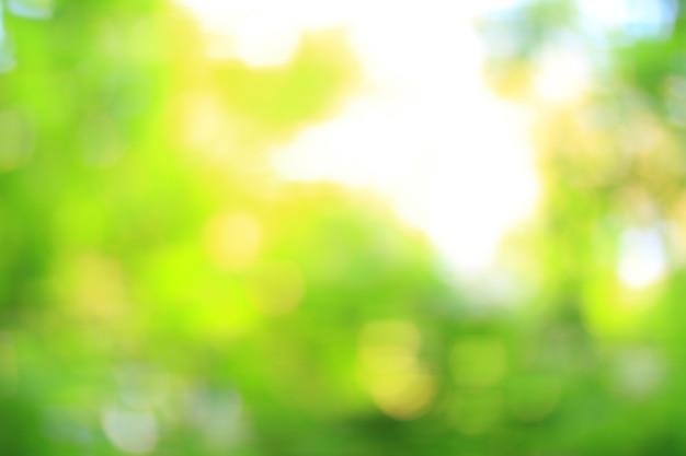 Fermer. image floue de feuillage vert frais dans la forêt. photo avec une copie - espace.