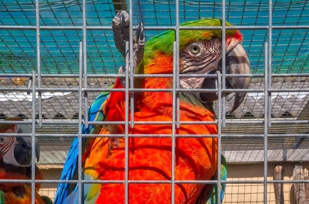 Fermer l'image d'un oiseau à plumes hollandais aux pays-bas